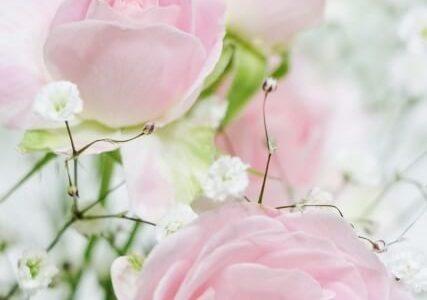 母の日バラ意味ピンク色のバラ