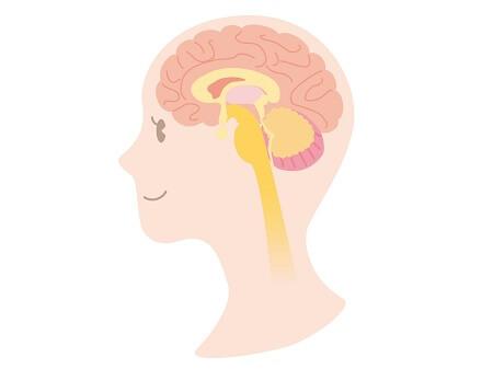 自律神経働き整える