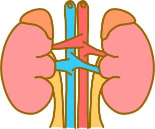 ルイボスティーむくみ腎臓