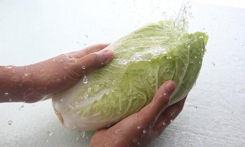 白菜 冷凍保存
