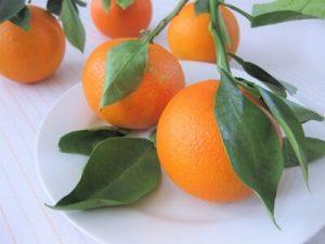 鏡餅 飾り 橙