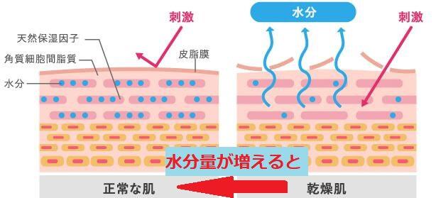 乾燥肌 角質層 - コピー
