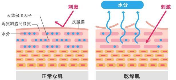 乾燥肌 角質層