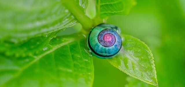 紫陽花 毒 カタツムリ