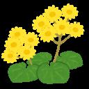 自由研究 植物採集
