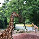 動物園デート つまらない