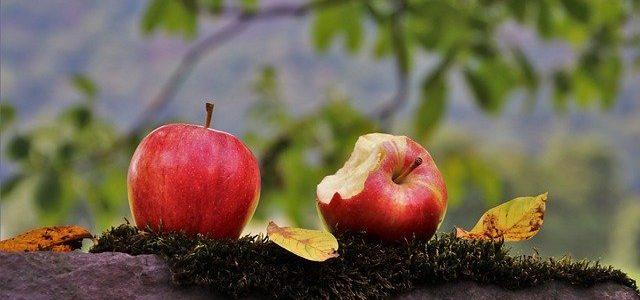 りんご丸かじり